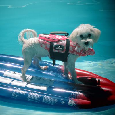 safetydog1